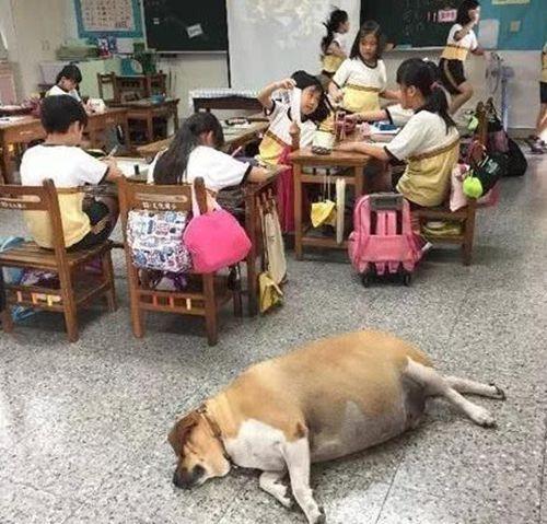 为什么中华田园犬这么聪明?_WWW.XUNWANGBA.COM