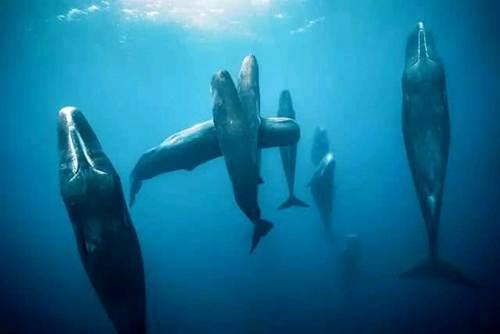 52Hz的鲸鱼_WWW.XUNWANGBA.COM