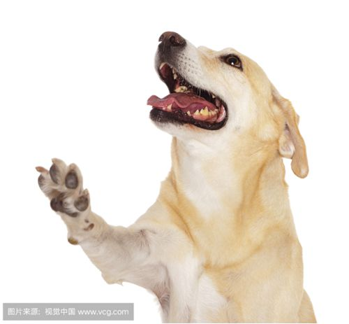 狂犬病 狗狗的致命杀手(狗狗篇)_WWW.XUNWANGBA.COM