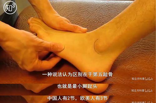 靠谱的科普 人体有206块骨头,而中国人却少了2块,是真是假_WWW.XUNWANGBA.COM