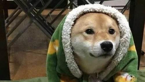 (向往的生活)中小H和小O是柴犬吗?多少R可以入手?_WWW.XUNWANGBA.COM