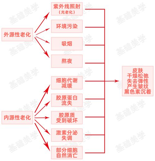 抗老入门必看 可能是史上最全的抗老成分解读_WWW.XUNWANGBA.COM