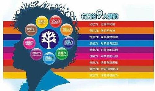 全脑开发课程介绍_WWW.XUNWANGBA.COM
