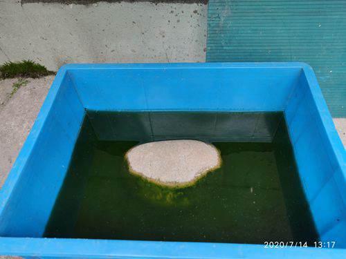 关于养龟裸缸还是过滤的问题_WWW.XUNWANGBA.COM