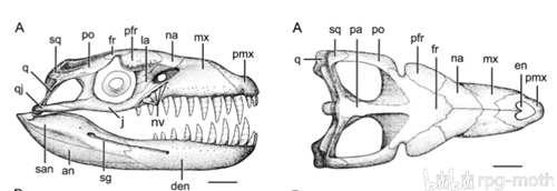 王者之路:鼠鲨目Lamniformes的传奇生涯(2)-源起_WWW.XUNWANGBA.COM