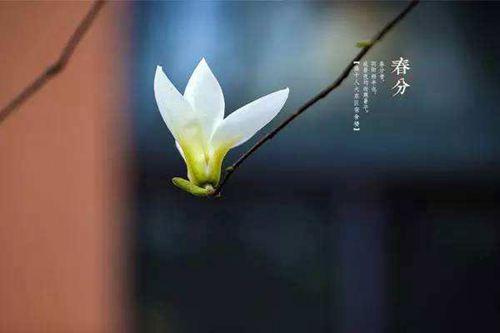 春分是几点几分几秒 春分时间_WWW.XUNWANGBA.COM