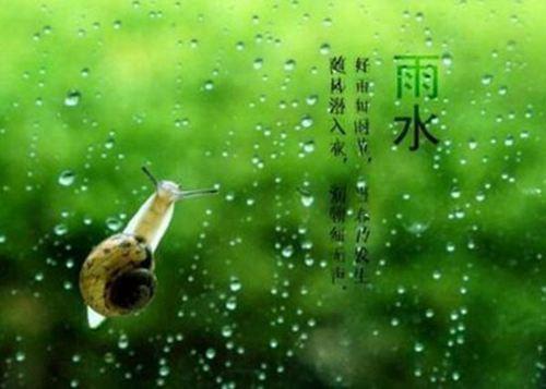 雨水节气可以种菜了吗 雨水节气可以种什么菜_WWW.XUNWANGBA.COM