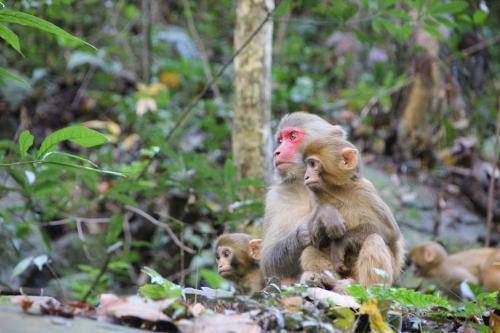 男子见义勇为被猴群报复 猴群中的母猴是怎么分配的_WWW.XUNWANGBA.COM