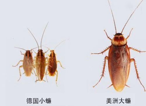 蟑螂被盖在锅盖下20天 蟑螂爬过的被子能盖吗_WWW.XUNWANGBA.COM