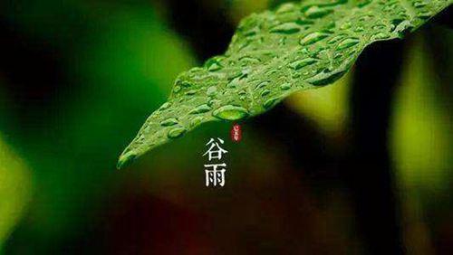 谷雨节气有什么特点 谷雨节气有几天_WWW.XUNWANGBA.COM