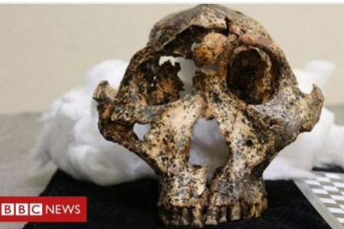 南非发现200万年前头骨化石 头骨化石是怎么形成的_WWW.XUNWANGBA.COM