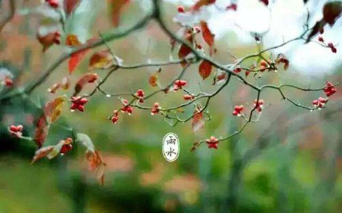 雨水节气有什么植物 雨水节气有什么动物_WWW.XUNWANGBA.COM