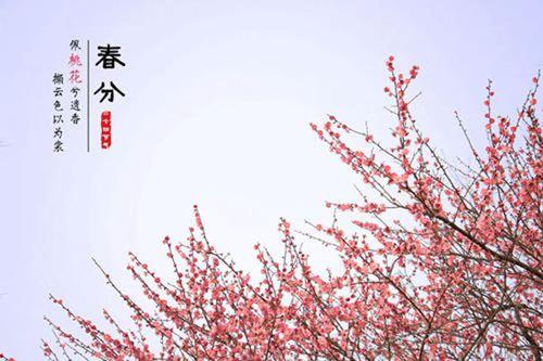 春分养生食物有哪些 春分养生吃什么水果_WWW.XUNWANGBA.COM