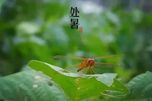 处暑吃什么 处暑吃什么传统食物 处暑吃什么食物养生_WWW.XUNWANGBA.COM