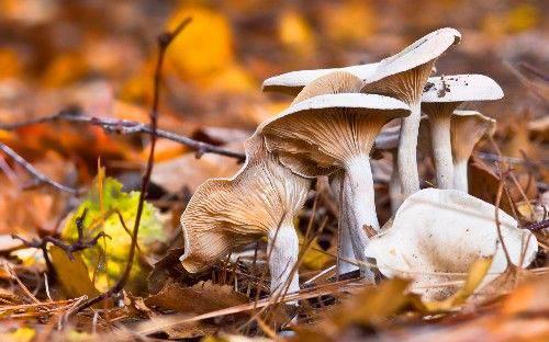 立秋之前出的蘑菇能吃吗 立秋之前的蘑菇能吃吗_WWW.XUNWANGBA.COM
