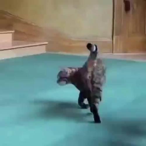 胖猫走路突然起飞360度空翻_WWW.XUNWANGBA.COM